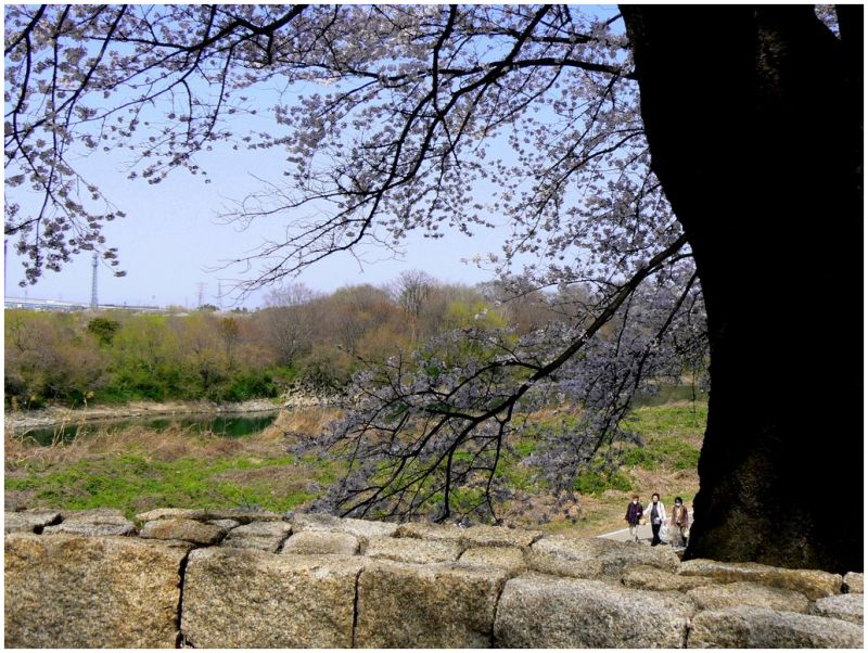 Walking beside the river in Spring