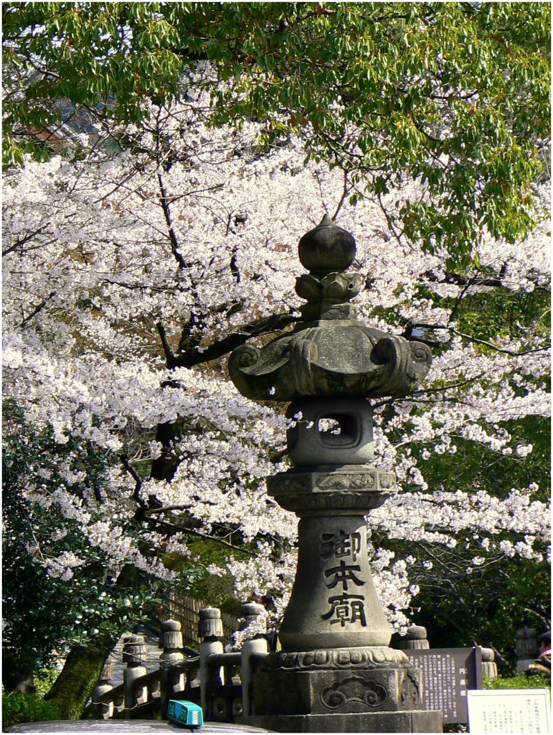Japanese stone lantern in Spring