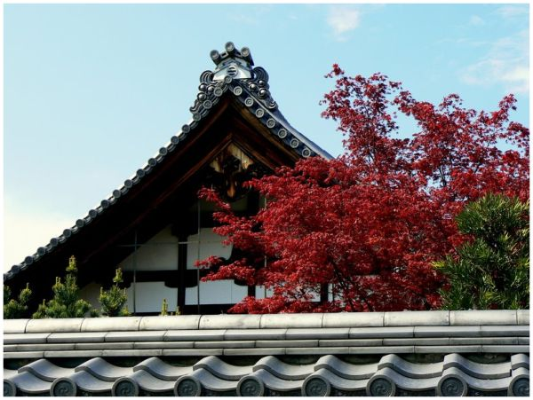 Red leaves  at Shokokuji Temple in Kyoto