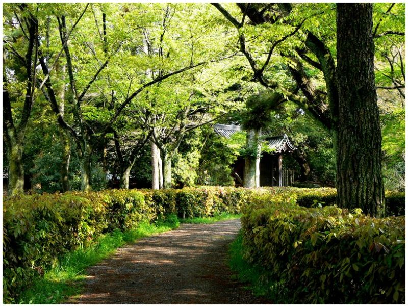 Path through trees in Kyoto Imperial Palace Park