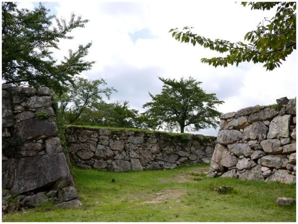 Cherry trees at Takeda Castle ruins