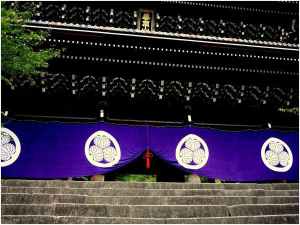 Purple door curtains