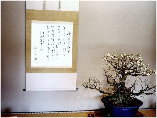 Bonsai plum tree and calligraphy  on display