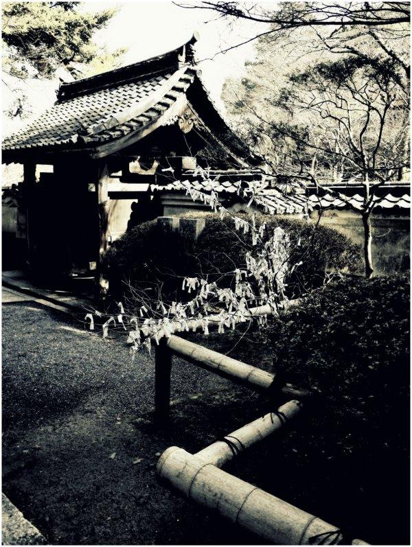 Zig-zag bamboo rail