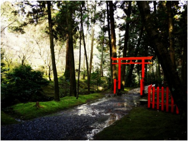 Path with red torii after rain