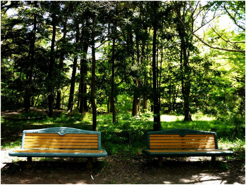 Inviting seats in a park