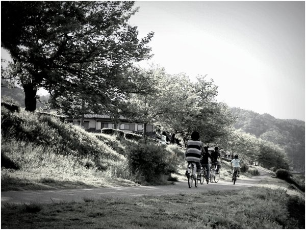 Family riding bicycles beside river