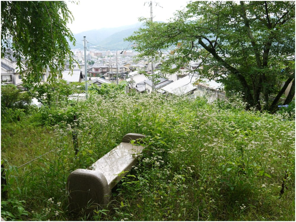View over city from flower-filled garden