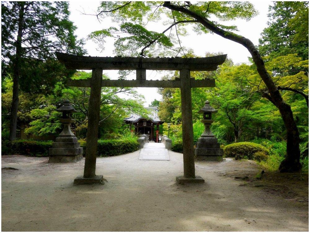 Torii at a Japanese shrine