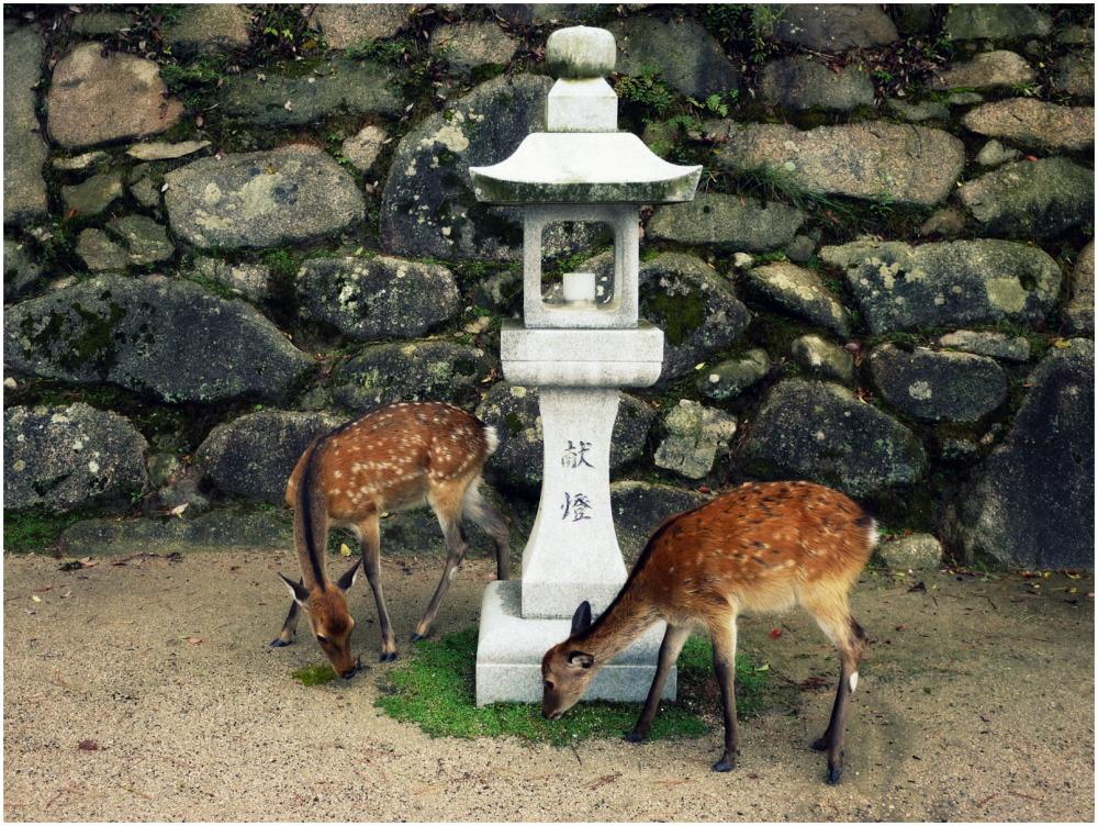 Deer & stone lantern