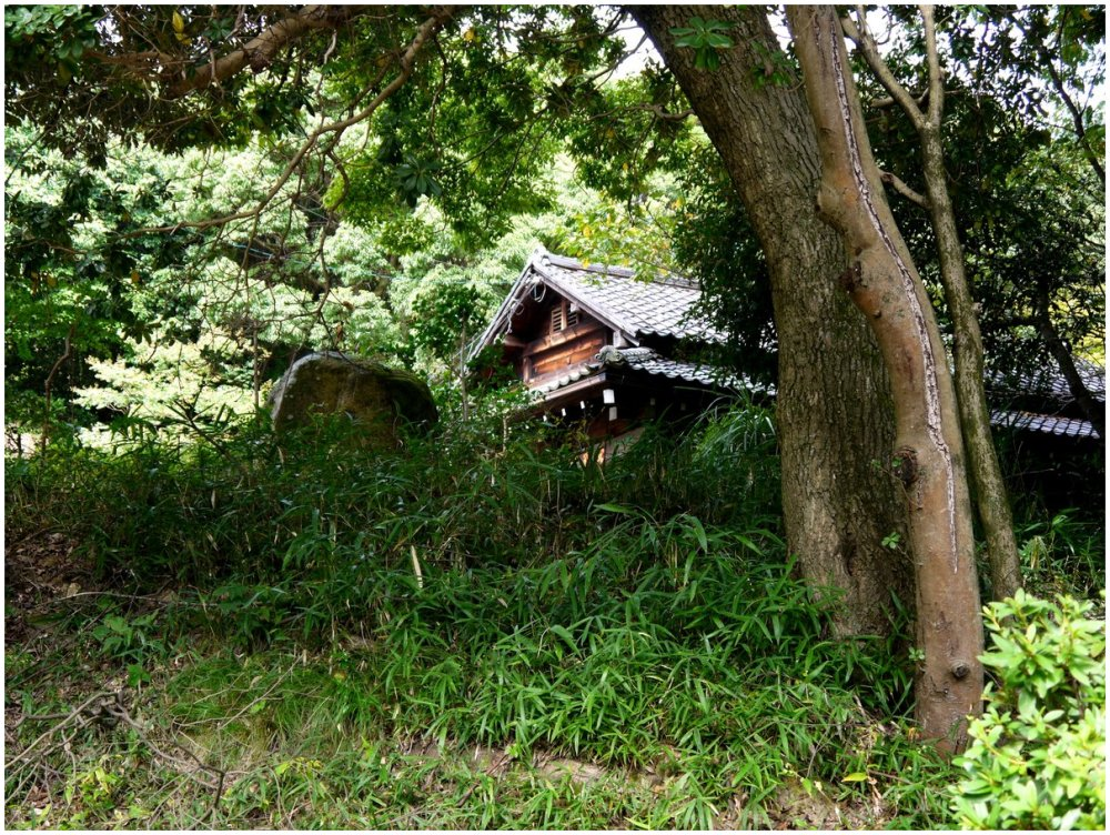 Japanese tiled roof house in trees
