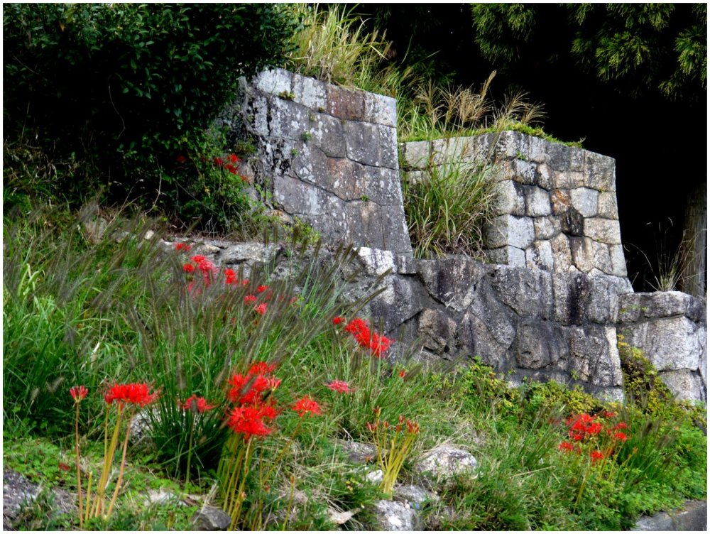 Red flowers and stone walls