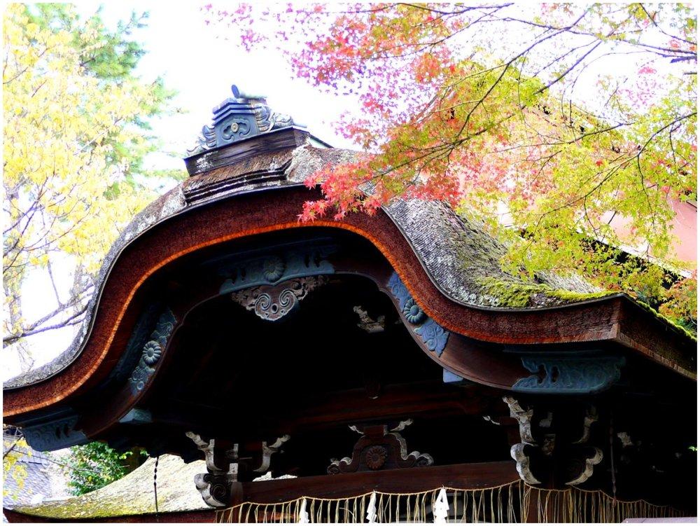 Fall foliage at Japanese temple