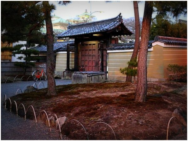 Japanese gate with pine trees
