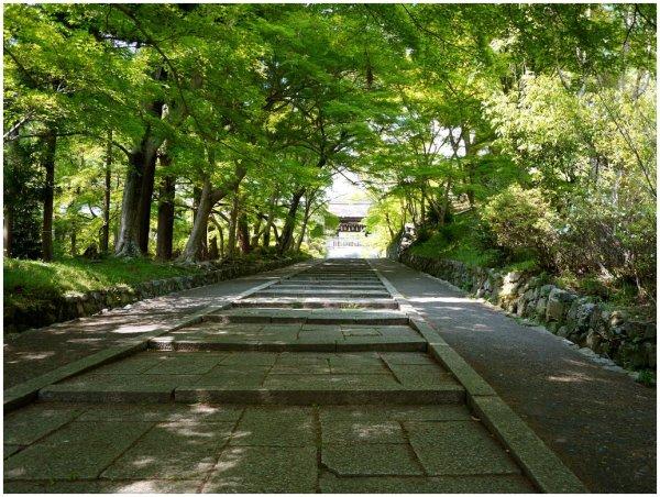Path through trees toward temple