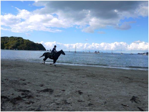 Horse galloping along a beach