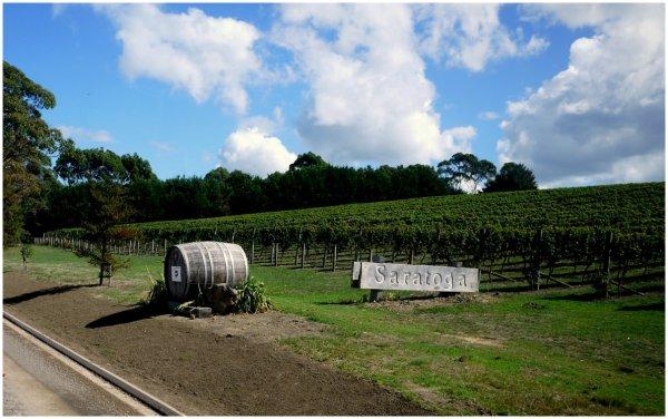 Saratoga Vineyard on Waiheke Island