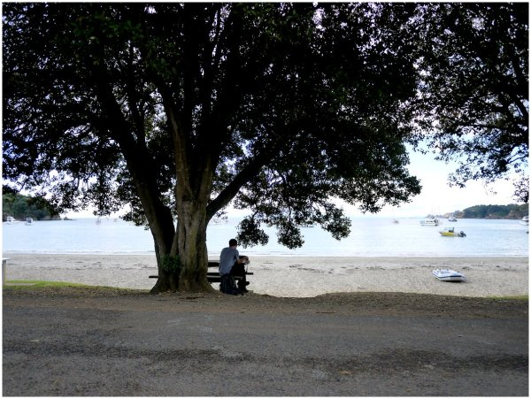 Man seated at a table under a tree by the beach