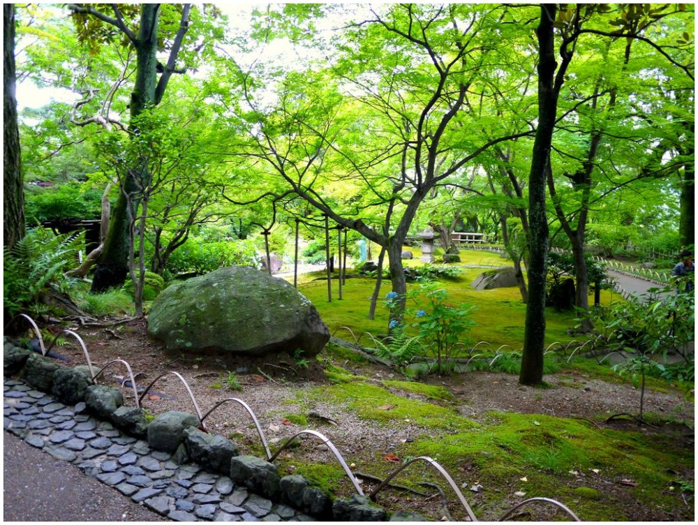 Japanese garden with moss and trees