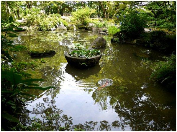 Pond at Yamazaki Villa