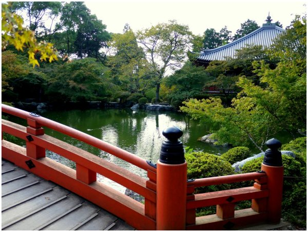 Japanese pond and garden