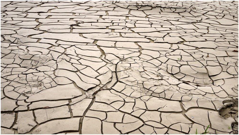 Cracks in dried mud