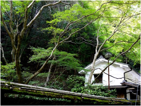 Old Japanese house in the trees