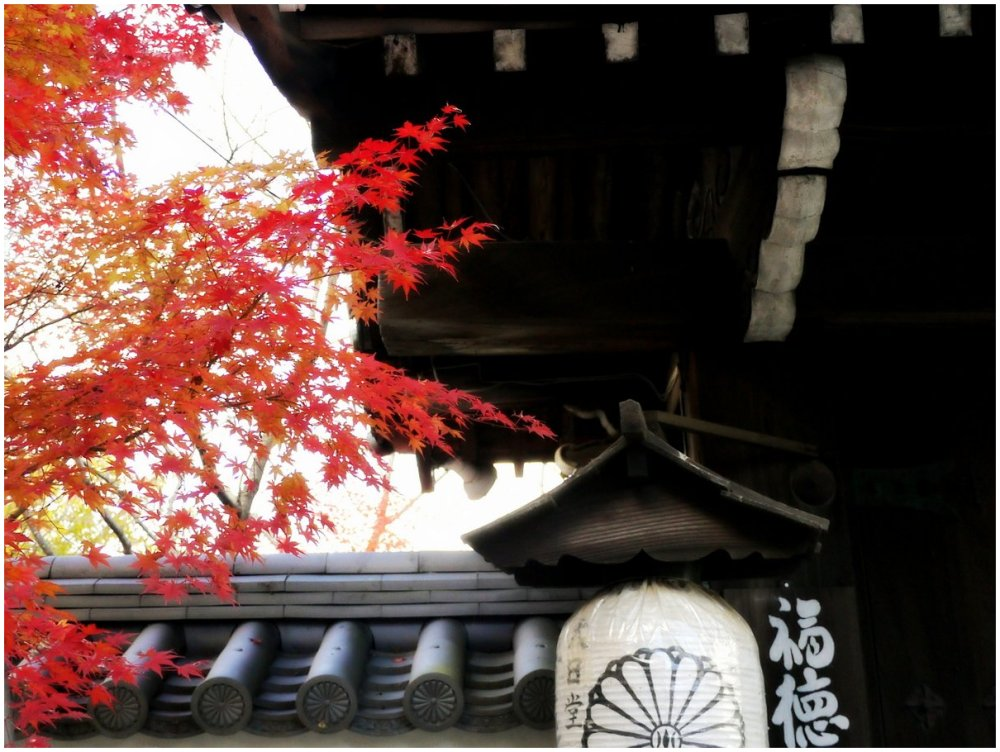 Japanese temple and maple trees in Autumn