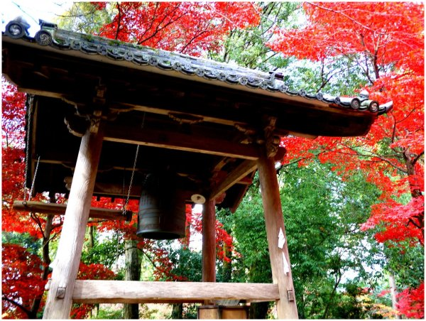 Japanese bell & red maple leaves