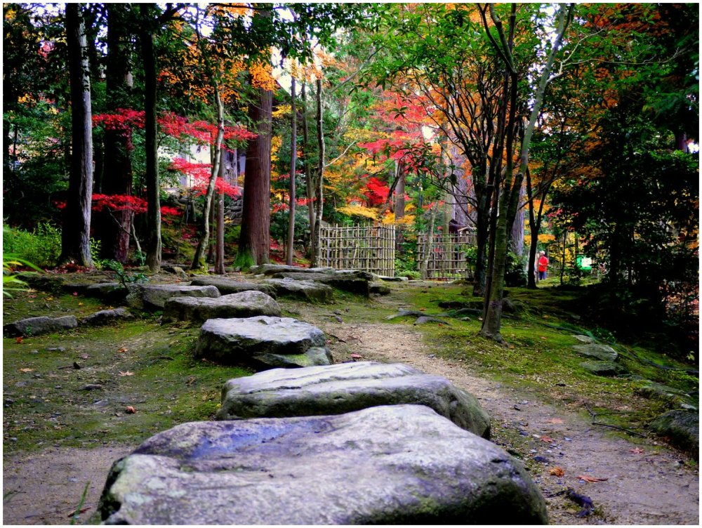 Stepping stones in a Japanese garden
