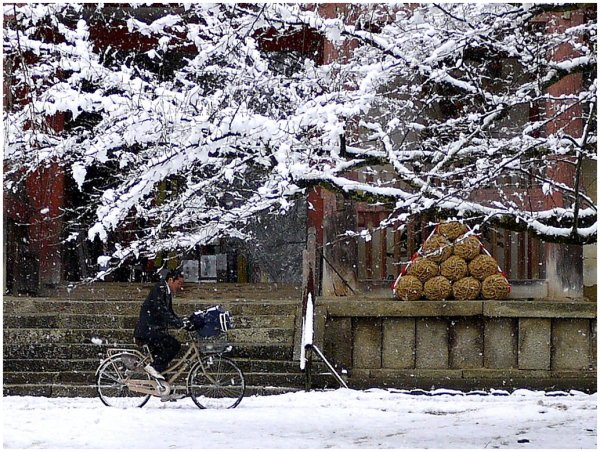 Boy riding bicycle in snow