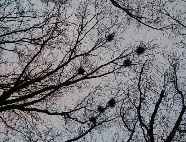 Tree Nestt Depression