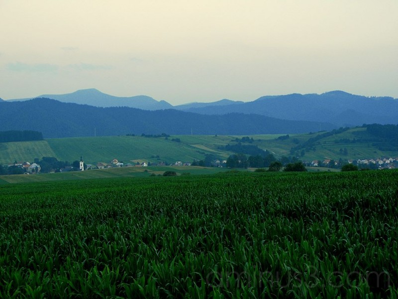 Corn field and village
