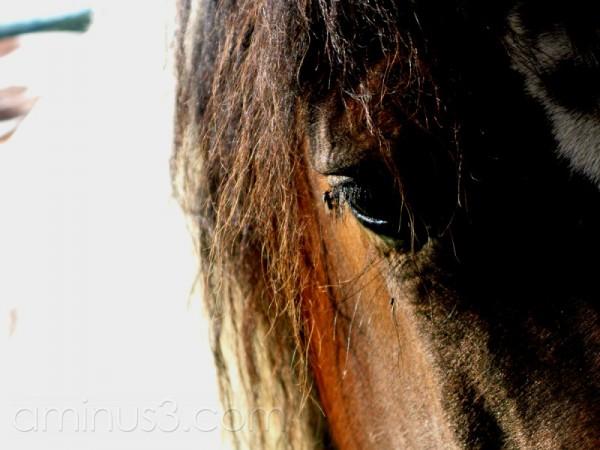 Sad horsewith flee on eye.
