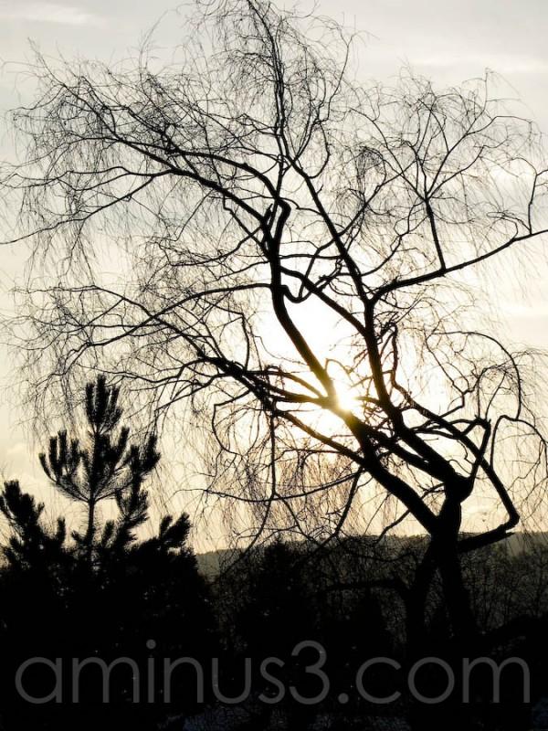 Light behind depresion photorraph of tree in dark.