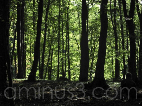 Young boy hiding in forest