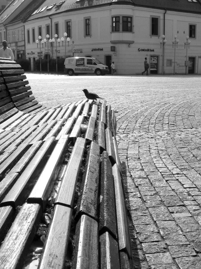 My morning on the city bench in Trnava.