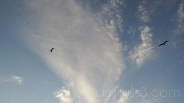Birds fly in front of blue sky.