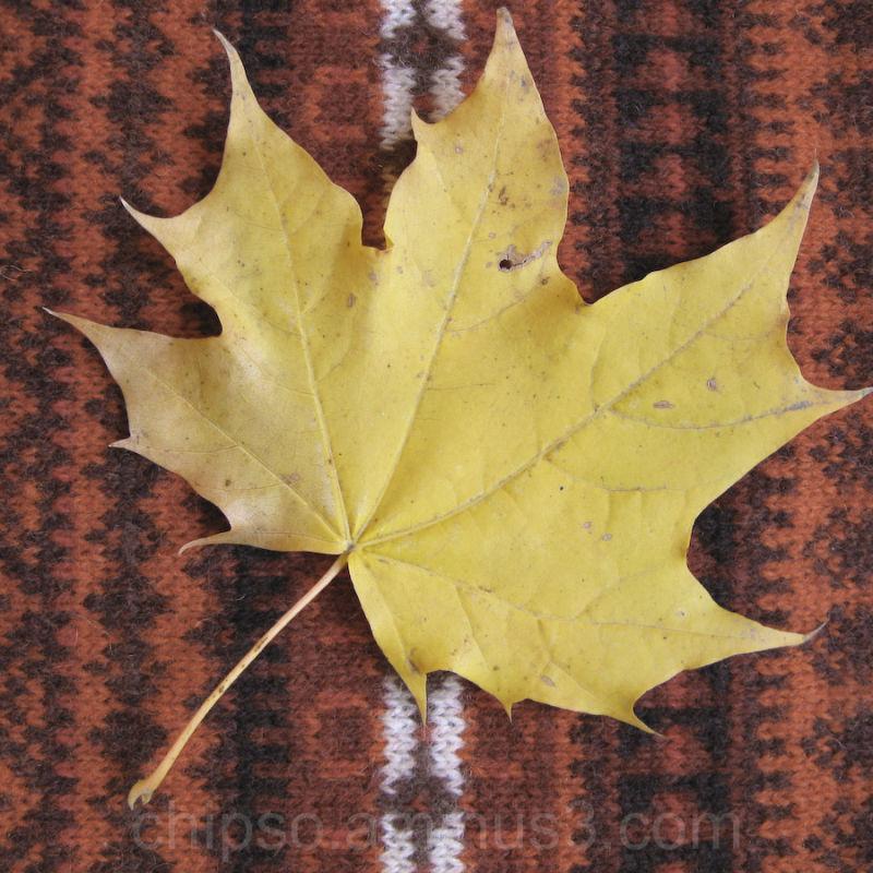 N1 Leaf in this year fall.