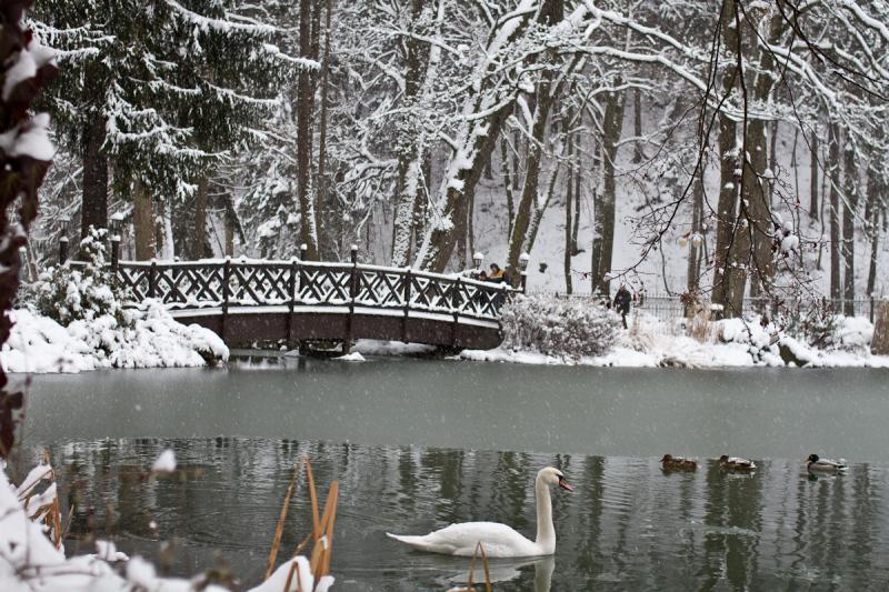 Pond in Rajecke Teplice, Slovak Republic.