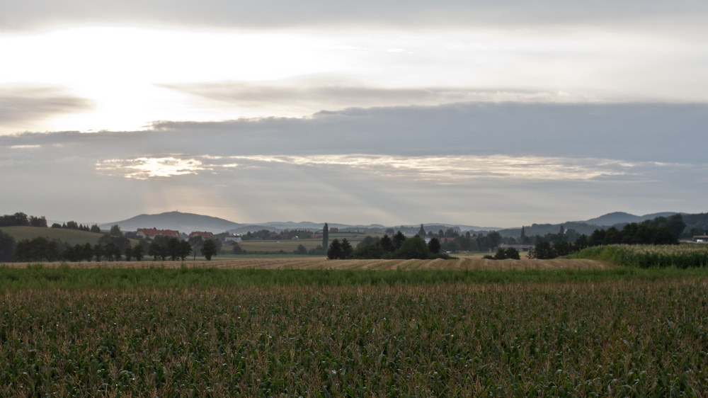 Landscape of Austrian corn field during cloudy day