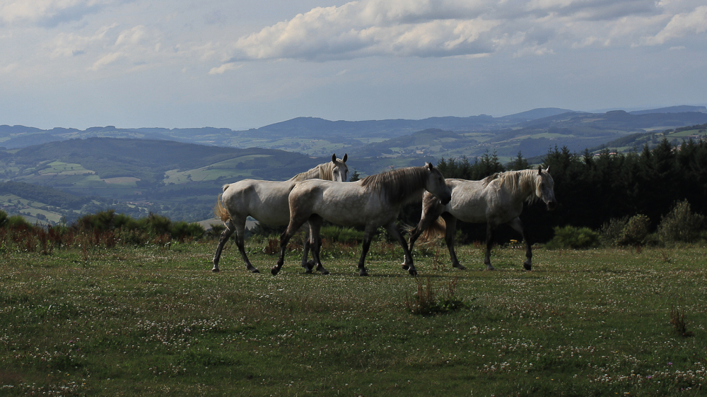 Horses taking pasture on meadow, France