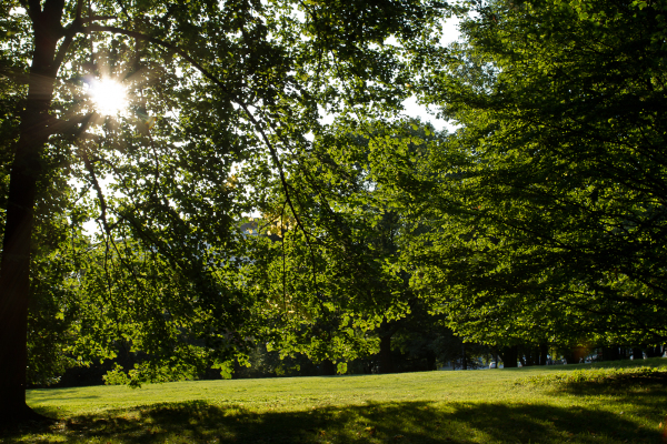 Back light photography of green park in sunny day.