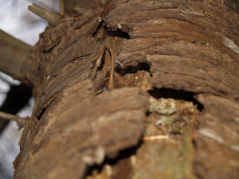 close up, bark, peel, nature