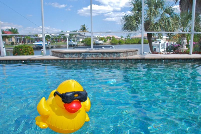 Ducky floats in the pool in Florida.
