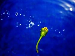 flower's bubble