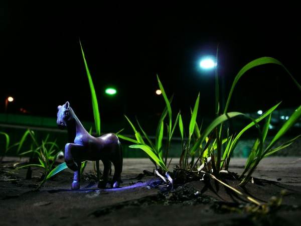 horse under spotlight