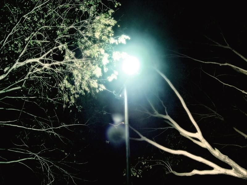 grow towards light