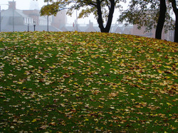 autumn's calling in leeds,united kingdom