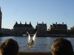 feeding mcdonald's to seagull at river thames